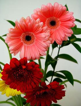 B Font Face Verdana Color Green Size 5 Las Flores Font B